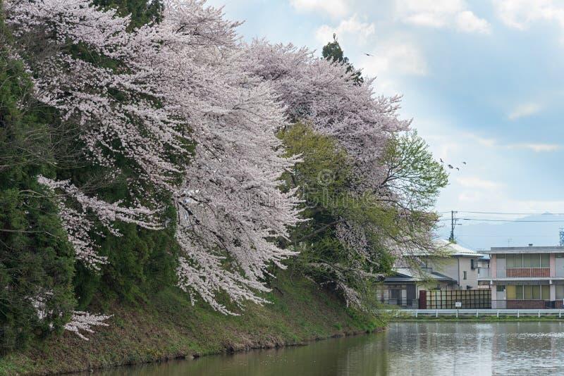 Τα δέντρα κεράσι-ανθών πλήρους άνθισης κατά μήκος των τάφρων κάστρων Kajo στοκ εικόνες με δικαίωμα ελεύθερης χρήσης