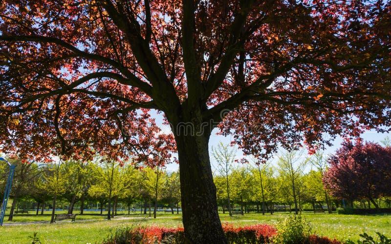 Τα δέντρα σταθμεύουν την άνοιξη στοκ φωτογραφία με δικαίωμα ελεύθερης χρήσης