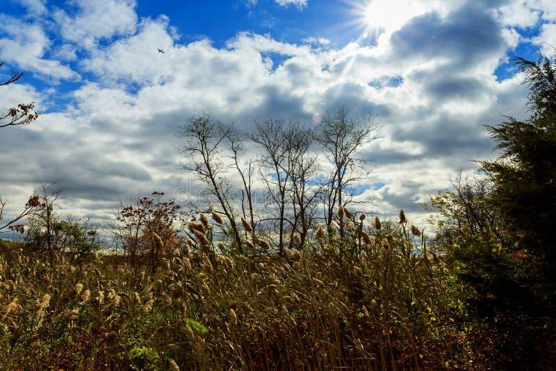 τα δέντρα φθινοπώρου χωρίς φύλλα, γυμνό δέντρο διακλαδίζονται η βαλανιδιά ενάντια στον ουρανό στοκ φωτογραφίες