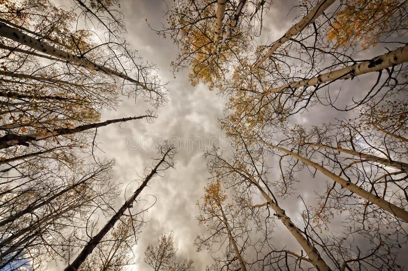 Τα δέντρα στοκ εικόνα με δικαίωμα ελεύθερης χρήσης
