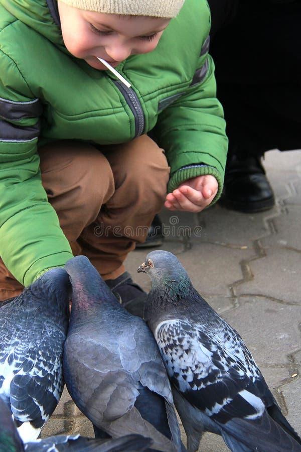 Τα αγόρια με τη μητέρα στα τετραγωνικά περιστέρια τροφών στοκ εικόνα με δικαίωμα ελεύθερης χρήσης