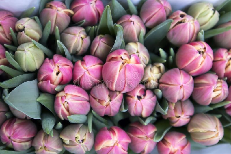 Τα αναμνηστικά σε Bloemenmarkt - να επιπλεύσει αγορά λουλουδιών στο κανάλι Singel φυλακτών netherlands στοκ εικόνες με δικαίωμα ελεύθερης χρήσης
