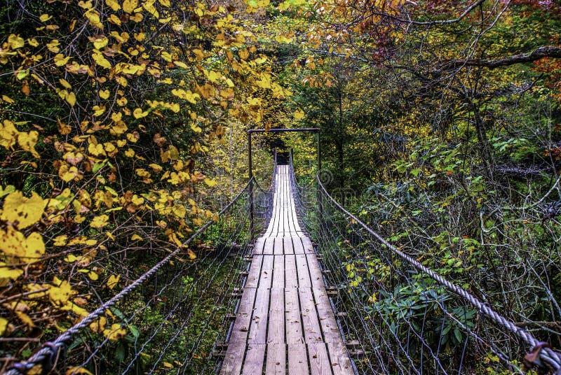 Ταλαντεμένος γέφυρα, ένας περίπατος μέσω της πτώσης στοκ εικόνες
