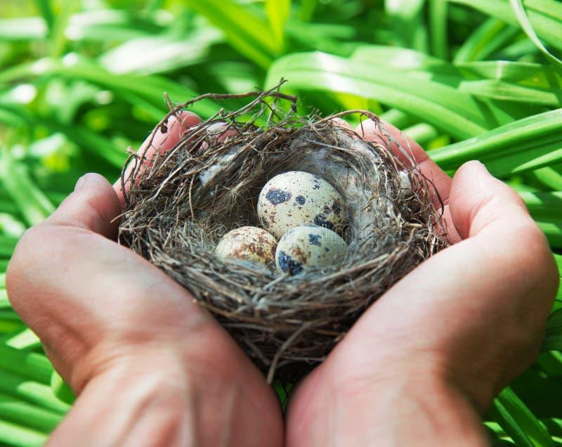 Τα αυγά στη φωλιά στοκ φωτογραφίες