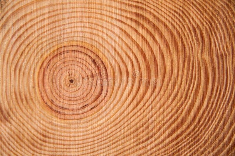 Τα δαχτυλίδια του δέντρου πεύκων στοκ φωτογραφία με δικαίωμα ελεύθερης χρήσης