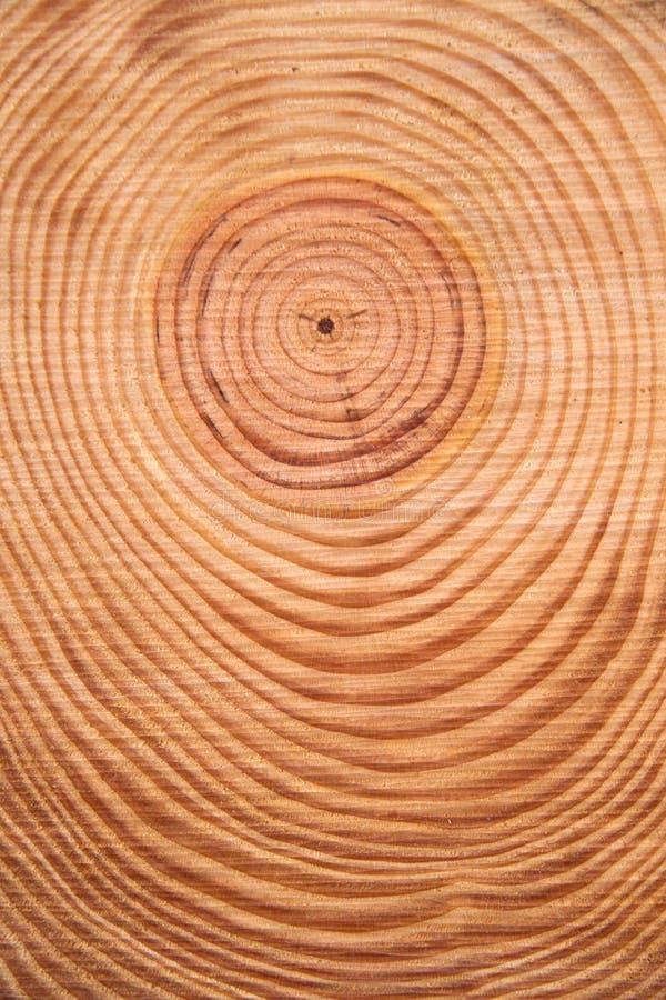 Τα δαχτυλίδια του δέντρου πεύκων στοκ εικόνα
