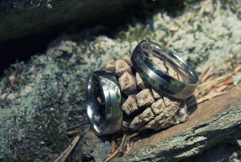 Τα γαμήλια δαχτυλίδια στη φύση στοκ εικόνες