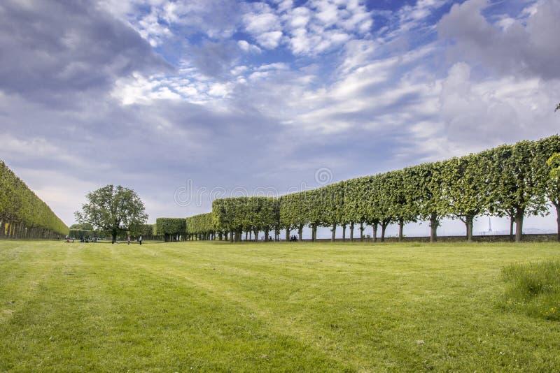 Τα γαλλικά τα δέντρα στο χορτοτάπητα σε Bellevue, Γαλλία στοκ εικόνες