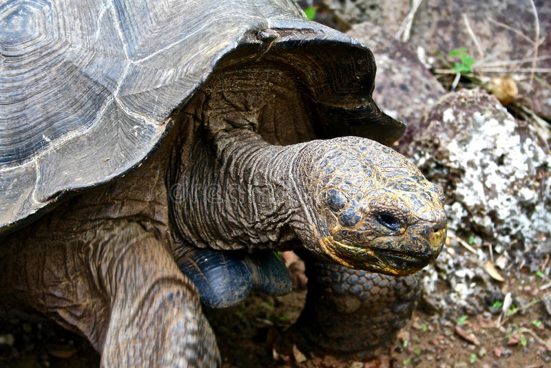 τα γιγαντιαία νησιά του Ισημερινού galapagos στοκ εικόνες