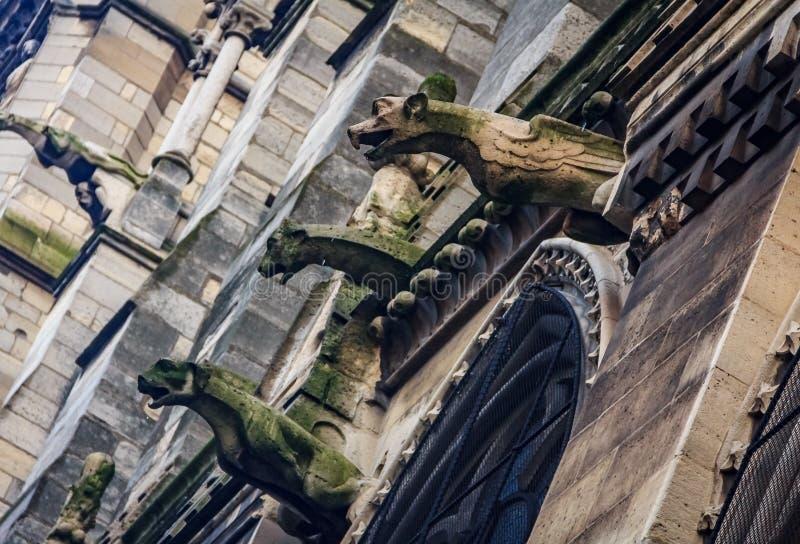 Τα γοτθικά gargoyles που καλύπτονται στο βρύο στην πρόσοψη του διάσημου καθεδρικού ναού της Παναγίας των Παρισίων στο Παρίσι Γαλλ στοκ φωτογραφία με δικαίωμα ελεύθερης χρήσης