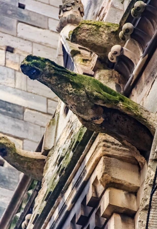 Τα γοτθικά gargoyles στην πρόσοψη του διάσημου καθεδρικού ναού της Παναγίας των Παρισίων στο Παρίσι Γαλλία με τη βροχή ρίχνουν τη στοκ εικόνα