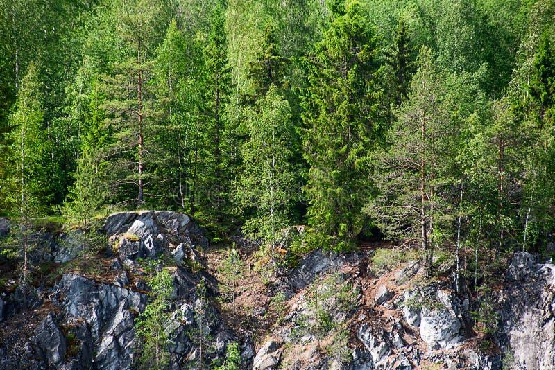 Τα δέντρα αυξάνονται mountainside στοκ φωτογραφία με δικαίωμα ελεύθερης χρήσης