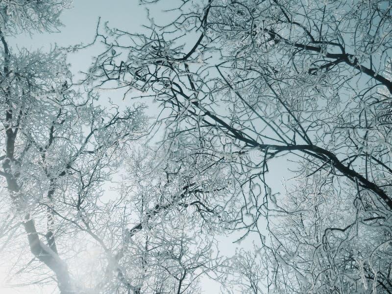 Τα δέντρα διαμαντιών λάμπουν κάτω από τον ήλιο στοκ φωτογραφία με δικαίωμα ελεύθερης χρήσης