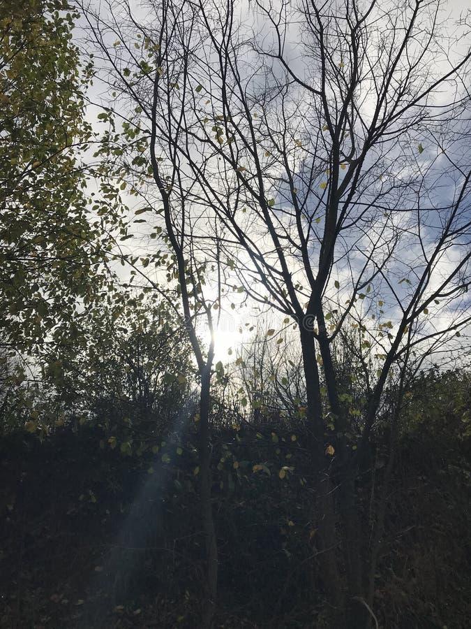 Τα δέντρα είναι οι φίλοι μας στοκ εικόνα