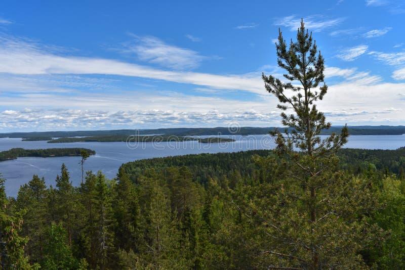 Τα δέντρα και τα νησιά πεύκων περιβάλλουν τη λίμνη Päijänne, το δεύτερο - μεγαλύτερη λίμνη στη Φινλανδία στοκ φωτογραφίες
