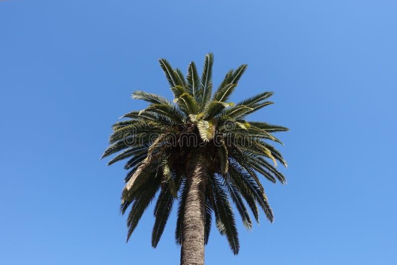 Τα δέντρα καρύδων στοκ εικόνα