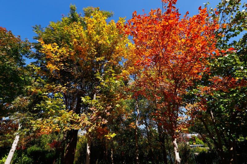 Τα δέντρα με τα χρώματα φθινοπώρου στο Si τριών παγοδών SAN TA καλλιεργούν, χρονολομένος από την ΑΓΓΕΛΊΑ περιόδου 618-907 του Tan στοκ εικόνες με δικαίωμα ελεύθερης χρήσης
