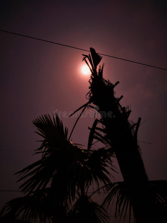 Τα δέντρα πηγαίνουν με τον ήλιο πολύ καλά στοκ φωτογραφίες με δικαίωμα ελεύθερης χρήσης