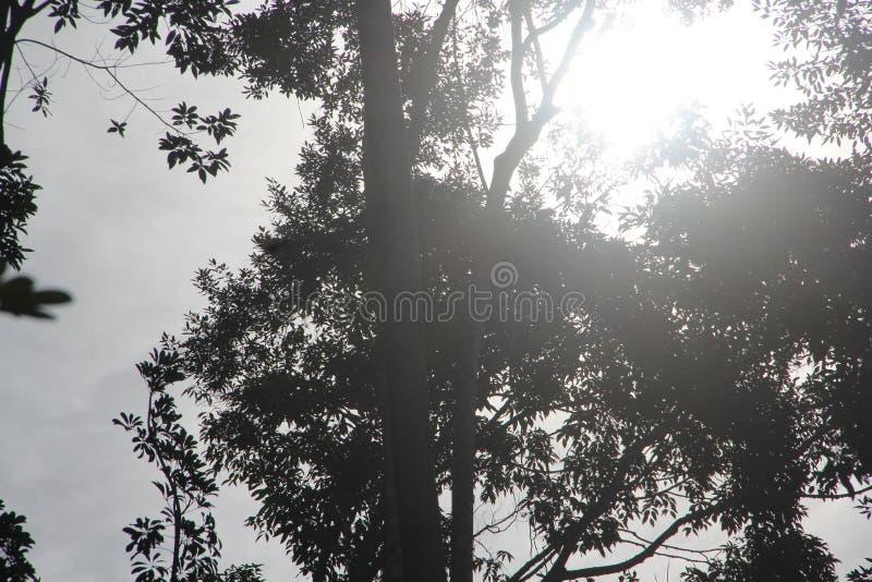 Τα δέντρα στο δάσος μετρούν το ηλιοβασίλεμα στοκ φωτογραφίες
