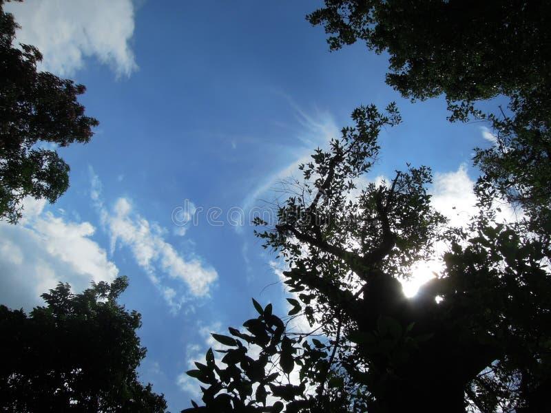 Τα δέντρα, τα φω'τα και τα σύννεφα μοιάζουν με κατά μια μαγική άποψη στοκ φωτογραφία
