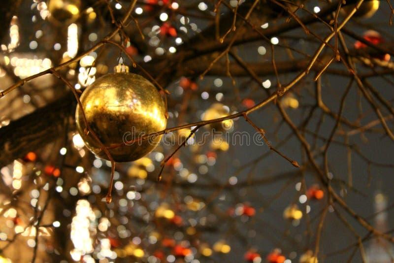 Τα δέντρα χωρίς φύλλα είναι διακοσμημένα με τις διακοσμήσεις Χριστουγέννων στις σφαίρες formof της κόκκινης και χρυσής κινηματογρ στοκ φωτογραφία με δικαίωμα ελεύθερης χρήσης