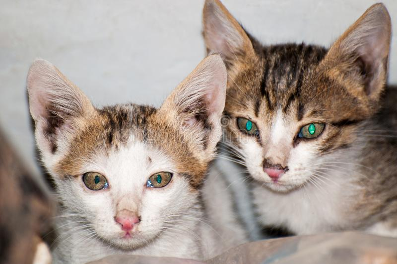 Τα δίδυμα χαριτωμένα γατάκια στοκ εικόνες