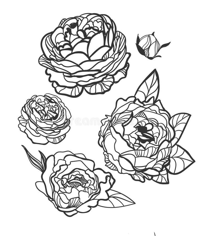 Τα διανυσματικά στοιχεία σχεδίου απεικόνισης σκίτσων φυτεύουν peony αυξήθηκαν διανυσματική απεικόνιση