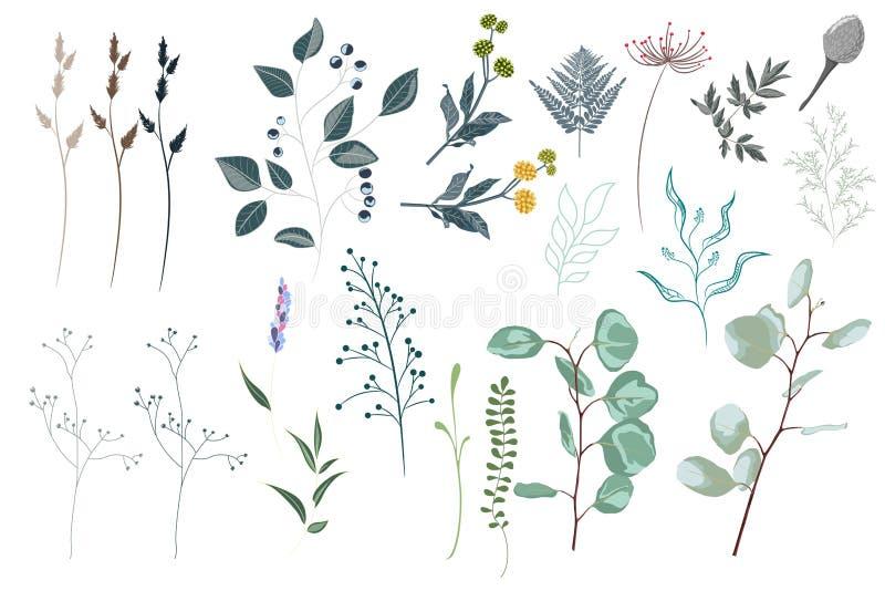 Τα διανυσματικά στοιχεία σχεδιαστών θέτουν τη συλλογή της πράσινης δασικής φτέρης, τροπικά πράσινα ευκαλύπτων πρασινάδων τέχνης χ απεικόνιση αποθεμάτων