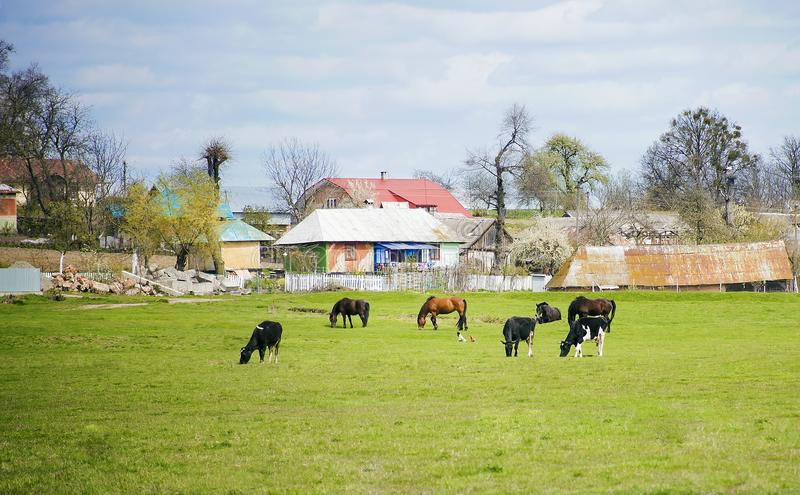 Τα διαφορετικά ζώα αγροκτημάτων βόσκουν στο λιβάδι στοκ εικόνες με δικαίωμα ελεύθερης χρήσης