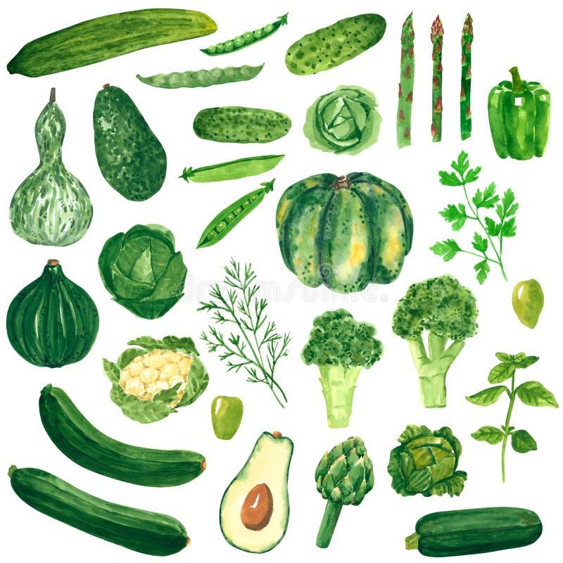 Τα διαφορετικά πράσινα λαχανικά clipart θέτουν, κολοκύθα, μπρόκολο, λάχανο, αγγούρι, αβοκάντο, συρμένη χέρι απεικόνιση watercolor ελεύθερη απεικόνιση δικαιώματος