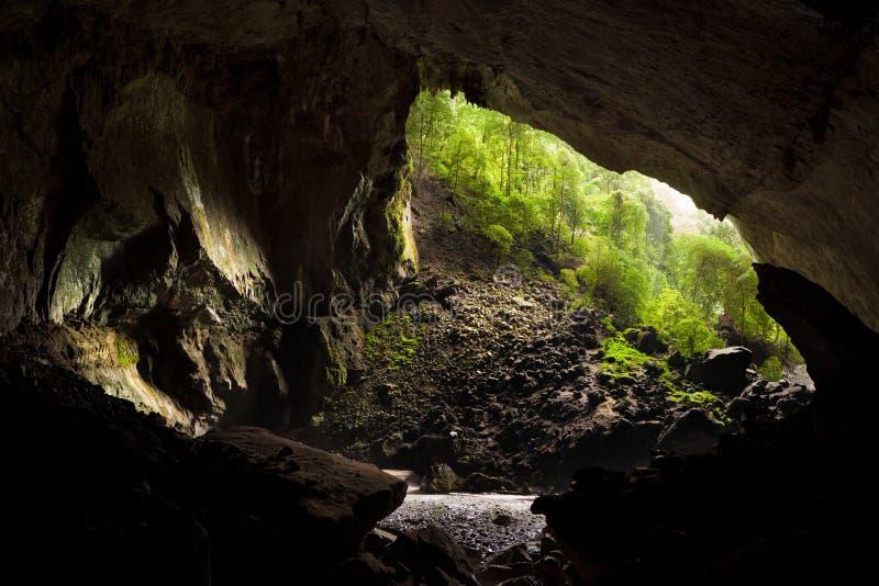 Τα ελάφια ανασκάπτουν μέσα το εθνικό πάρκο mulu gunung στοκ εικόνες με δικαίωμα ελεύθερης χρήσης