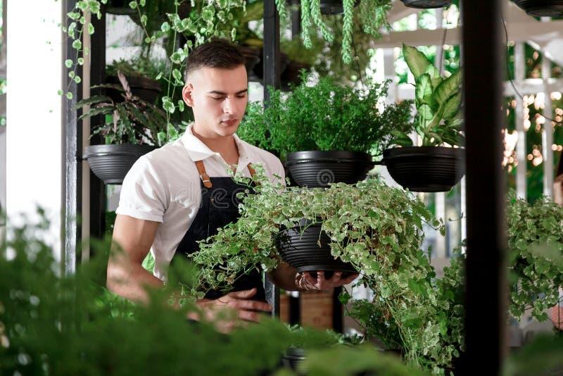 Τα ελκυστικά νέα λουλούδια θερμοκηπίων καφέδων ποδιών αγοριών ατόμων σχεδιάζουν το εσωτερικό μέρος που πολλά δοχεία διαφορετικά φ στοκ εικόνες