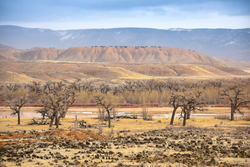 Τα ελάφια κατοικούν το πάρκο, άποψη ποταμών του Κολοράντο το χειμώνα στοκ εικόνες