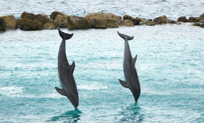 Τα δελφίνια που δίνουν ένα άλμα και βουτούν παρουσιάζουν στοκ φωτογραφίες
