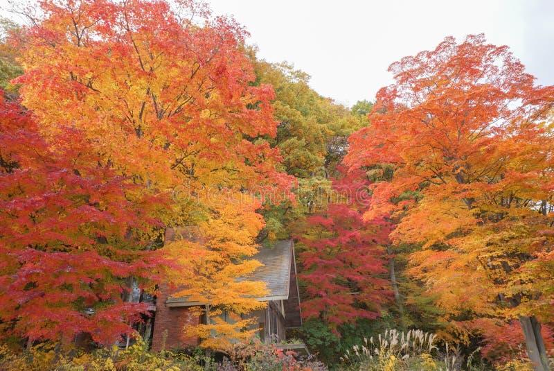 Τα ζωηρόχρωμα μεταβαλλόμενα δέντρα χρώματος το φθινόπωρο γύρω από το βουνό του Φούτζι στη λίμνη Kawaguchiko, Ιαπωνία στοκ εικόνες με δικαίωμα ελεύθερης χρήσης