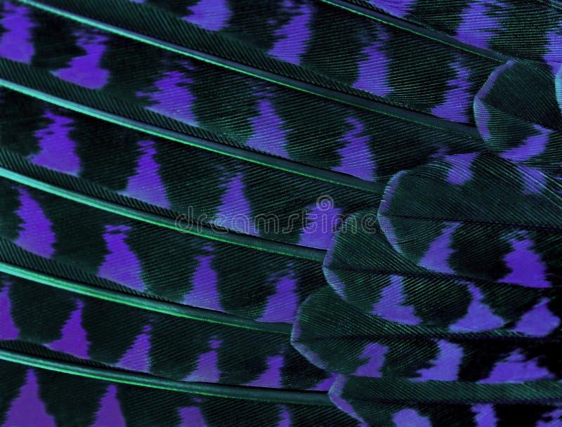 Τα ζωηρόχρωμα φτερά μιας κινηματογράφησης σε πρώτο πλάνο πουλιών στοκ εικόνες με δικαίωμα ελεύθερης χρήσης