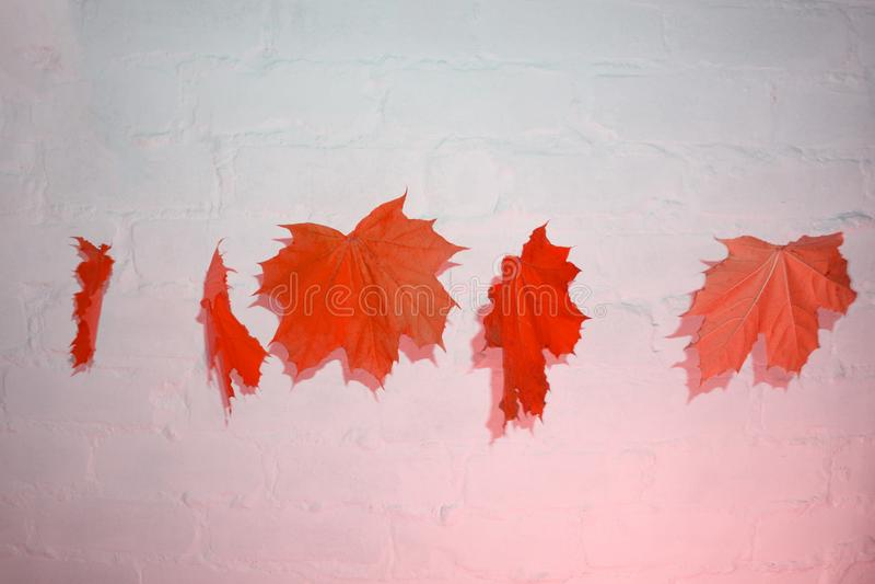 Τα ζωηρόχρωμα φύλλα φθινοπώρου κρέμασαν στο σχοινί, το ντεκόρ πτώσης για το σπίτι και τον κήπο στοκ εικόνα