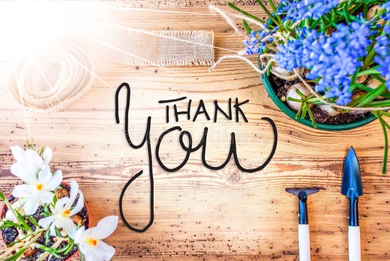 Τα ηλιόλουστα λουλούδια ανοίξεων, καλλιγραφία σας ευχαριστούν, ξύλινο υπόβαθρο στοκ εικόνα με δικαίωμα ελεύθερης χρήσης