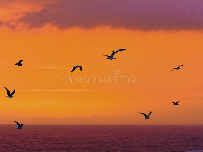 Τα θαλασσοπούλια πετούν μετά από ένα θεαματικό ηλιοβασίλεμα στις εκβολές ποταμού θυελλών στην επιφύλαξη φύσης Tsitsikamma στη Νότ στοκ εικόνα