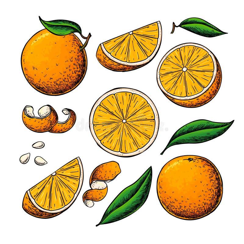 Πορτοκαλί διανυσματικό σχέδιο φρούτων Τα θερινά τρόφιμα χάραξαν απομονωμένο το απεικόνιση συρμένων χέρι ολόκληρου και μισού πορτο απεικόνιση αποθεμάτων
