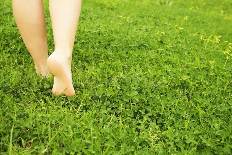 Τα θηλυκά γυμνά πόδια επάνω η χλόη χορτοταπήτων Η νέα στήριξη γυναικών υπαίθρια χωρίς παπούτσια, παίρνει μια έννοια σπασιμάτων Σπ στοκ εικόνα