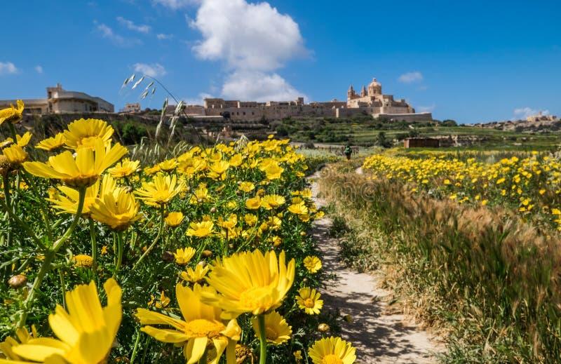 Τα κίτρινα λουλούδια άνοιξη στο πρώτο πλάνο το ευρύ ανοιγμένο άνοιγμα με η παλαιά πόλη Mdina και οι οχυρώσεις του στοκ φωτογραφία με δικαίωμα ελεύθερης χρήσης
