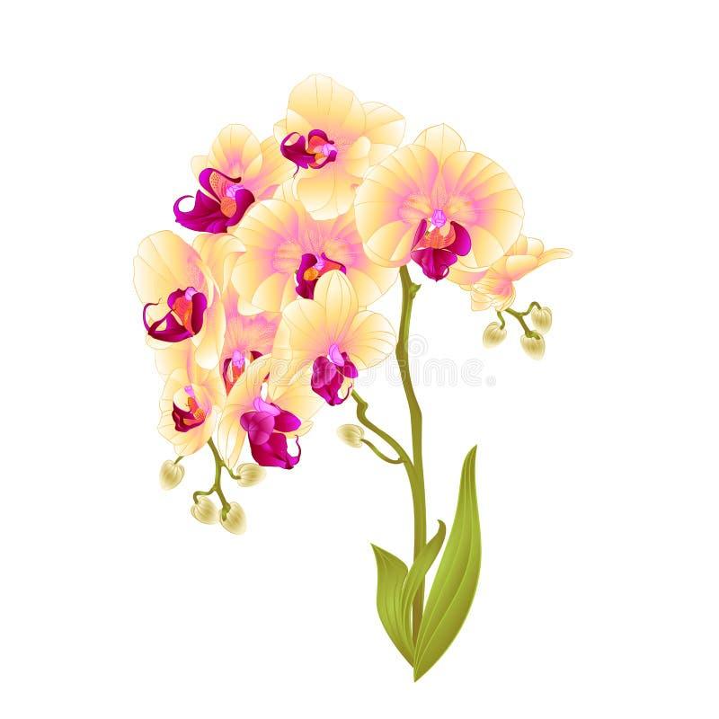 Τα κίτρινα λουλούδια Phalaenopsis ορχιδεών κλάδων και τα τροπικά φυτά φύλλων προέρχονται και οφθαλμοί άσπρο εκλεκτής ποιότητας δι ελεύθερη απεικόνιση δικαιώματος