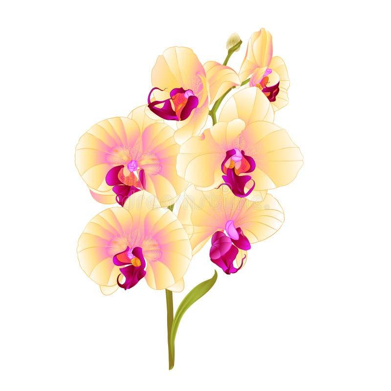 Τα κίτρινα λουλούδια Phalaenopsis ορχιδεών κλάδων και τα τροπικά φυτά φύλλων προέρχονται και οφθαλμοί άσπρο εκλεκτής ποιότητας δι διανυσματική απεικόνιση