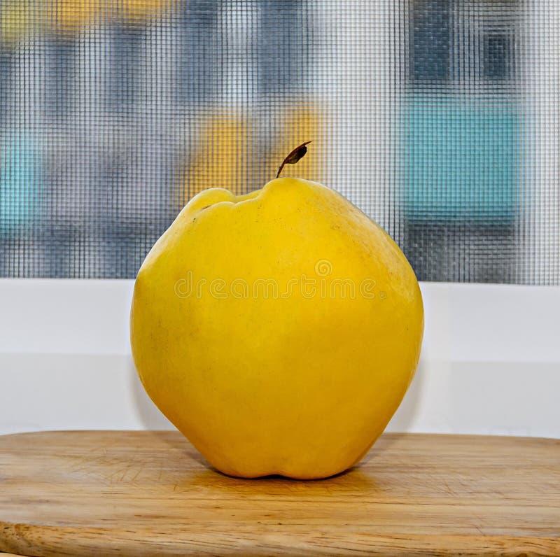 Τα κίτρινα φρούτα oblonga Cydonia κυδωνιών, κλείνουν επάνω απομονωμένος στοκ φωτογραφία