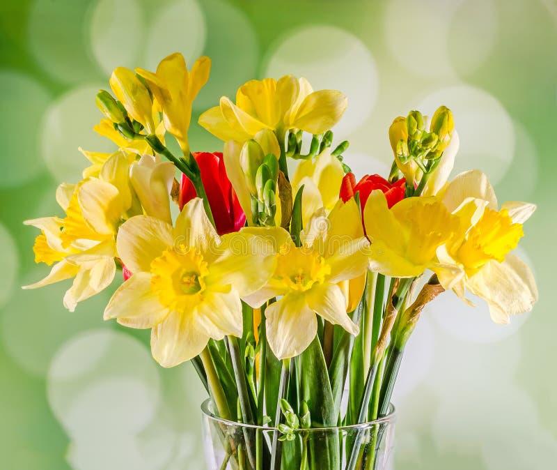 Τα κίτρινα daffodils και τα λουλούδια freesias, κόκκινες τουλίπες σε ένα διαφανές βάζο, κλείνουν επάνω, άσπρο υπόβαθρο, που απομο στοκ φωτογραφία