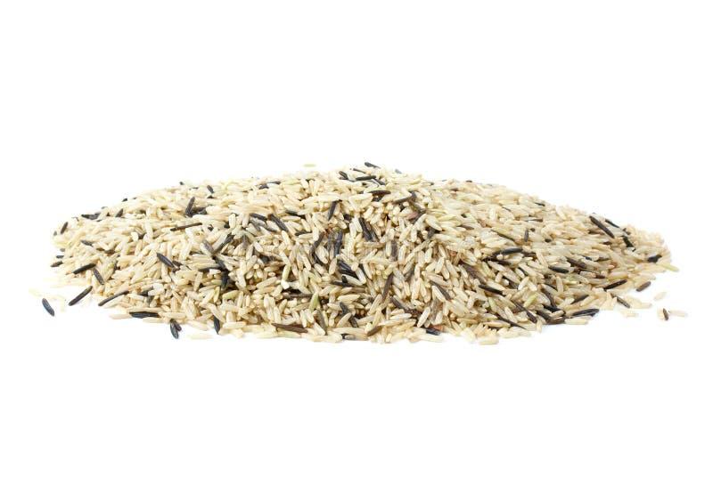 τα καλλιεργημένα σιτάρια μικτά συσσωρεύουν τις άγρια περιοχές ρυζιού στοκ φωτογραφία με δικαίωμα ελεύθερης χρήσης