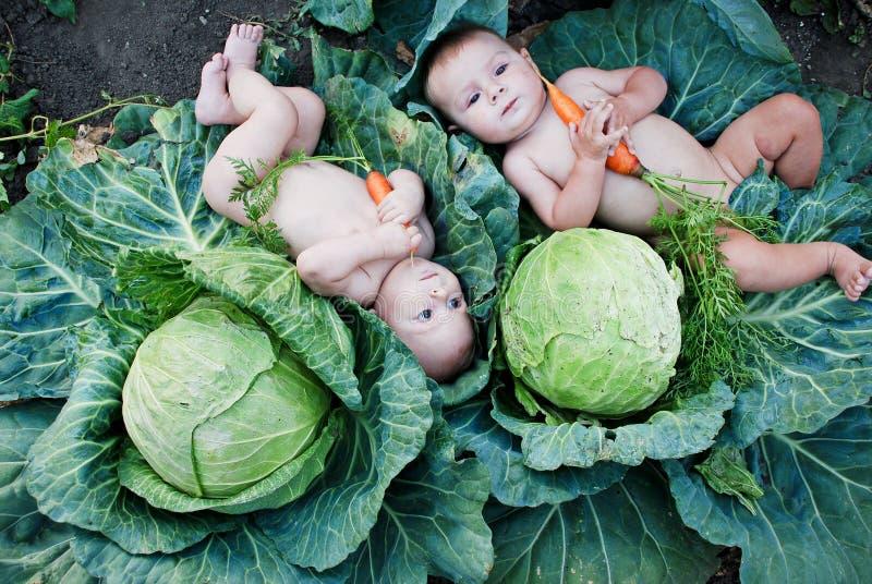 τα καρότα αγοριών καλλιεργούν λίγο παιχνίδι στοκ φωτογραφία με δικαίωμα ελεύθερης χρήσης