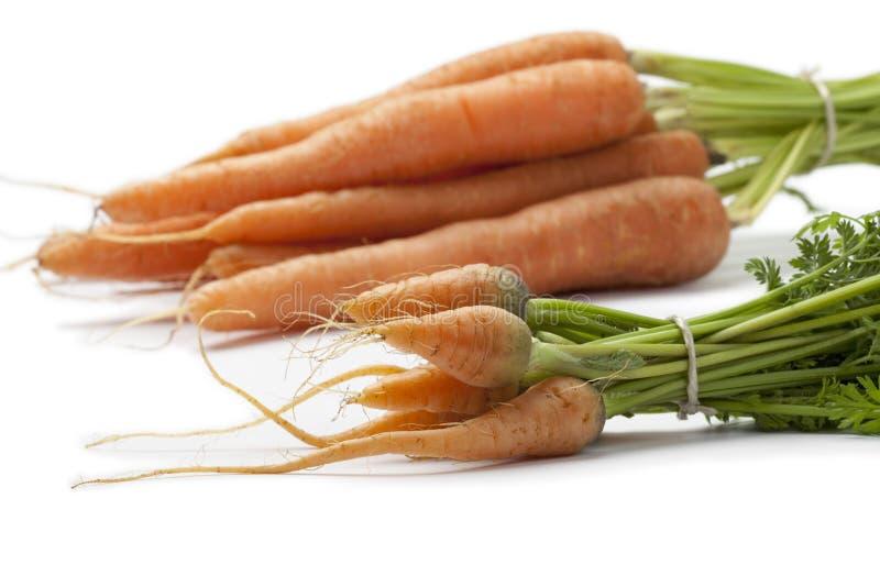 τα καρότα μωρών κλείνουν φρέσκα μεγάλοι επάνω στοκ εικόνα