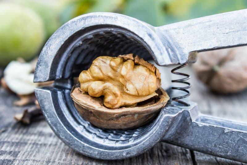 Τα καρύδια και οι καρυδιές βρίσκονται πάνω σε ένα σκουριασμένο παλιό ξύλινο τραπέζι κοντά στον καρυοθραύστη Πυρήνες καρυδιών στοκ φωτογραφίες με δικαίωμα ελεύθερης χρήσης